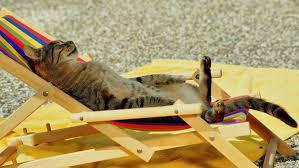 Международный день кошек - 8 августа.