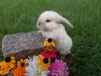 Как выбрать и купить здорового кролика?