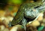 Что надо знать перед покупкой черепахи